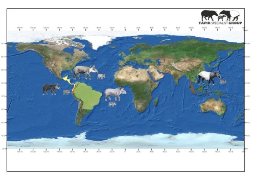 World distribution of tapirs (from Tapir Specialists Group)