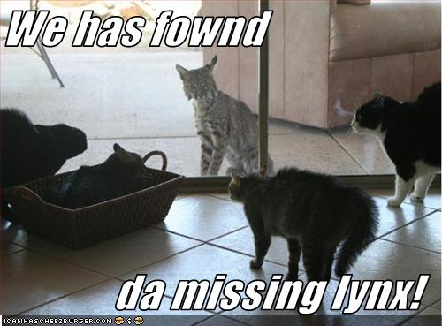 missing lynxjpg