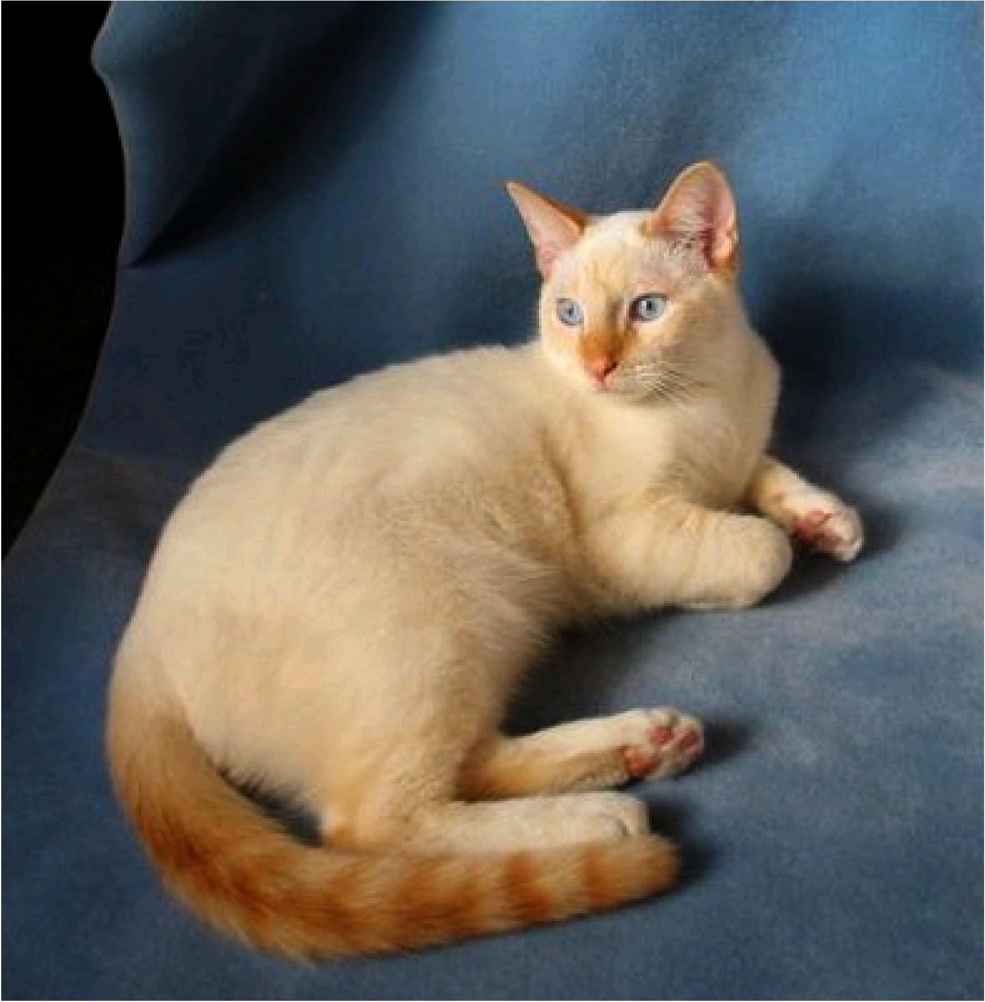 fat cat definition