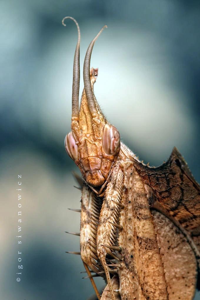Igor Siwanowicz Photography 24 171 Why Evolution Is True