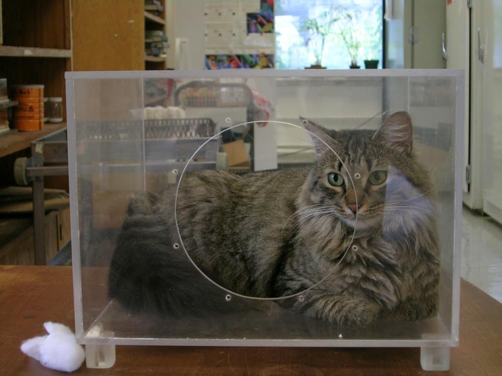 Maya in cage