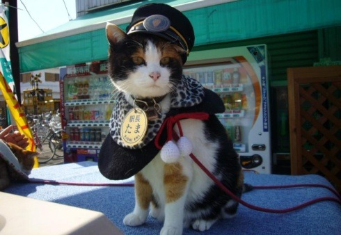 tama-cat-train-station-japa - The cat who saved a Japanese rail line - Tira-Pasagad | Saksak-Sinagol