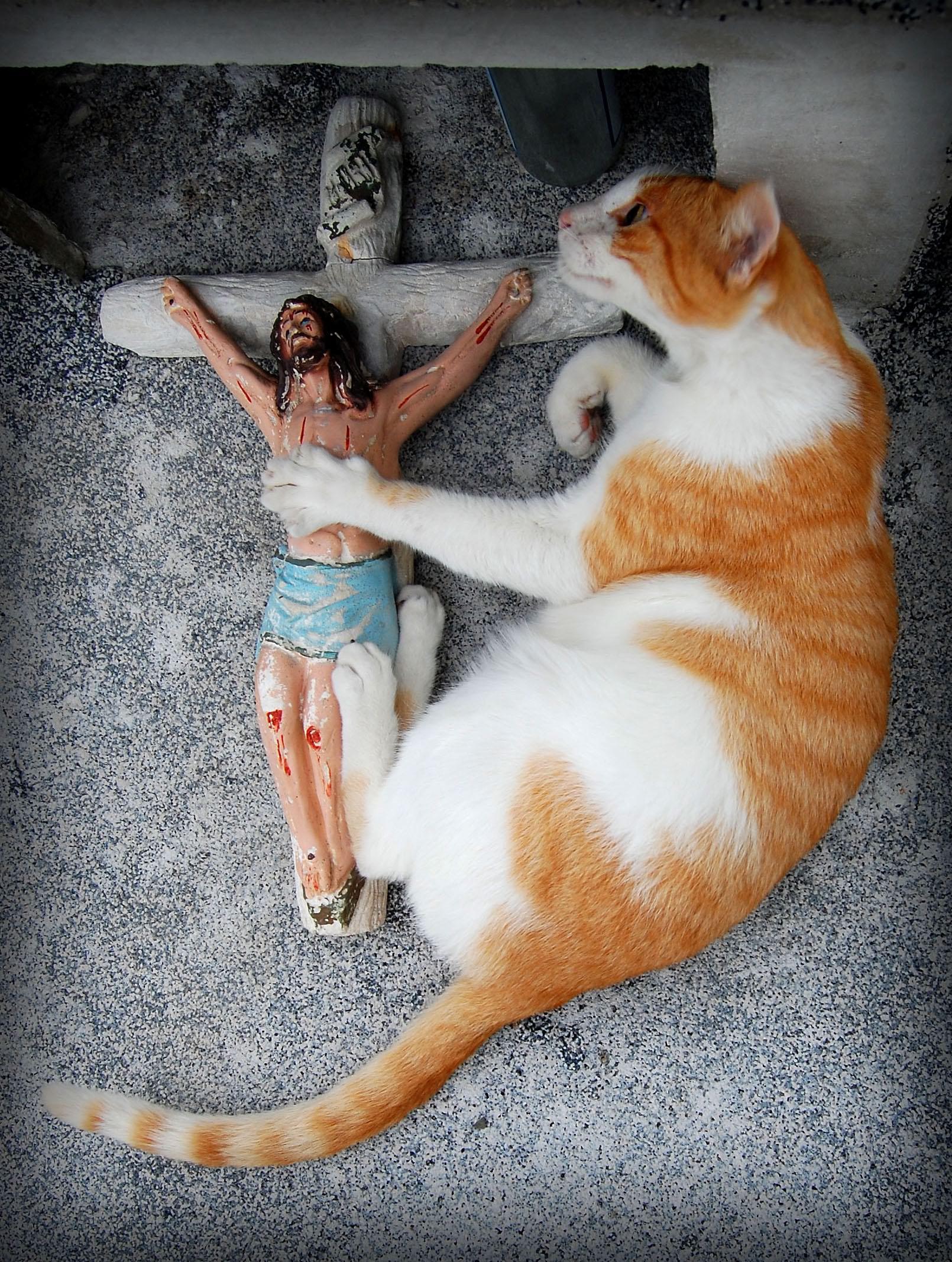 Crucifix Cat 171 Why Evolution Is True