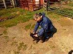 Petting barn cat