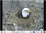 EagleCam 2
