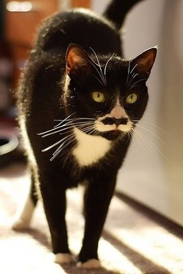 Caturday felid cats with moustaches and chubby cat bonus 171 why
