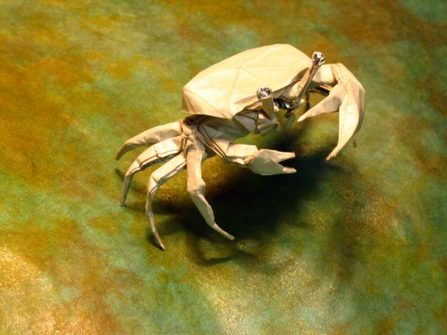 fiddlercrab1