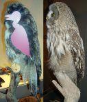 509px-Strix_nebulosa_plumage