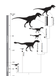 Figure 3 | A simplified cladogram showing the systematic position of Y. huali among the Tyrannosauroidea. Silhouettes indicate body size and possible extent of plumage. Different tyrannosauroids seem to have attained gigantic body size independently in the Early and Late Cretaceous, but only in the Early Cretaceous is there direct evidence of a gigantic form with an extensively feathered integument. This may reflect the relatively cold climate of the middle Early Cretaceous. See also Supplementary Information.