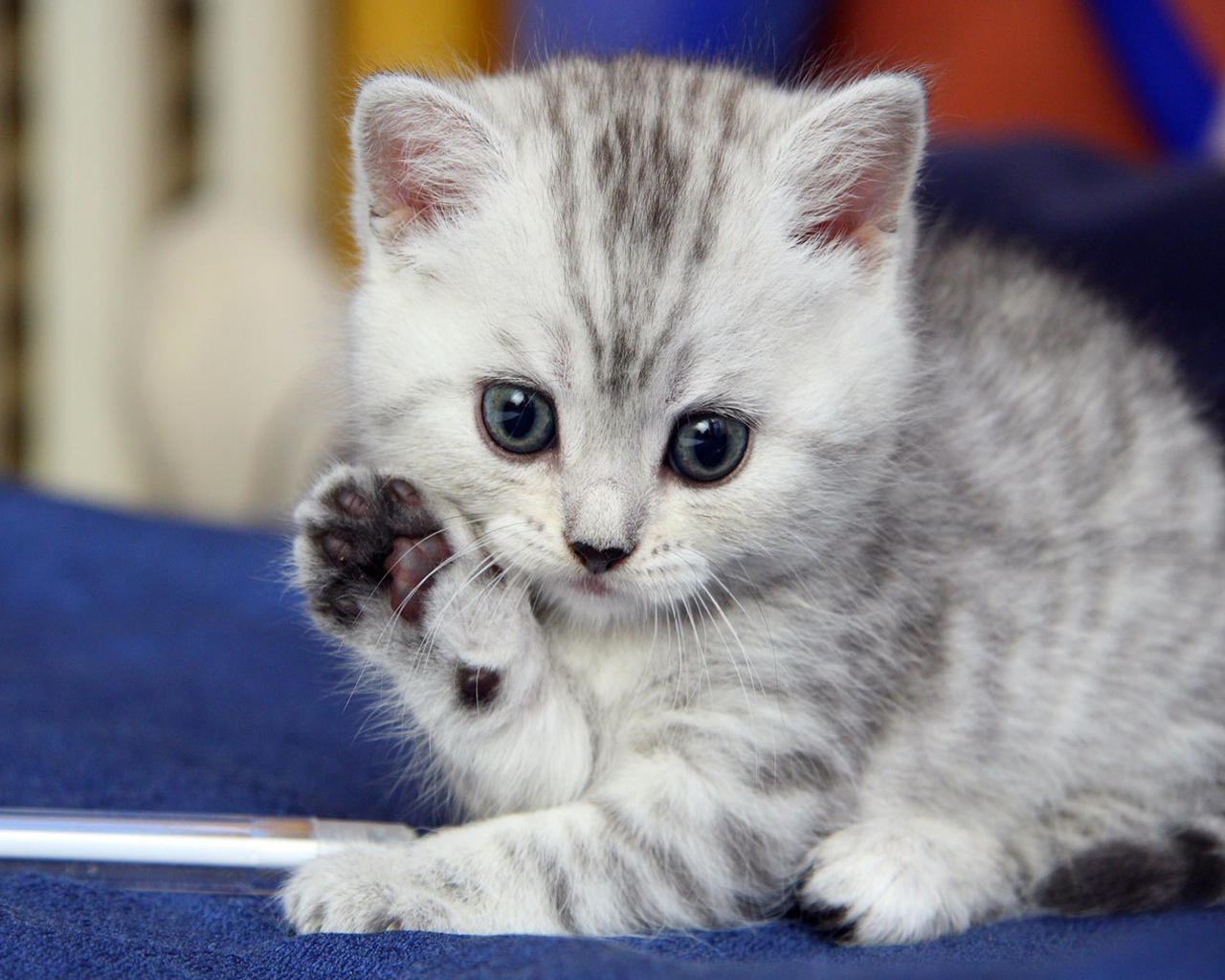 Cute-kitten-saying-hello « Why Evolution Is True