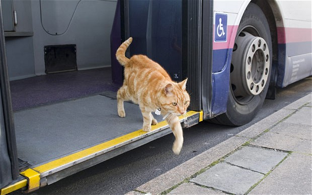 Artful Dodger hops off the bus near his home in Bridport, Dorset Photo: Peter Willows/BNPS