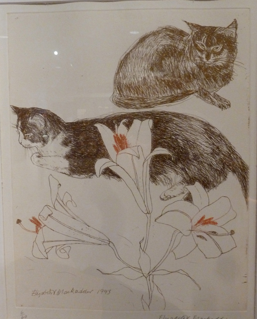 Cats, elizabeth blackadder