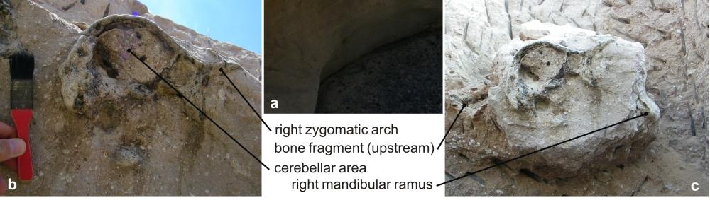 Detail from Figure 2, Antoine et al (2012)