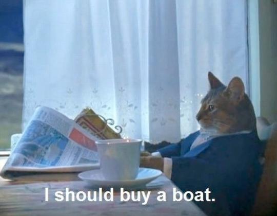 Boat cat