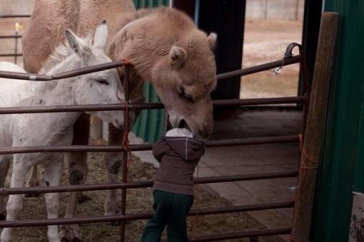 Camelnom