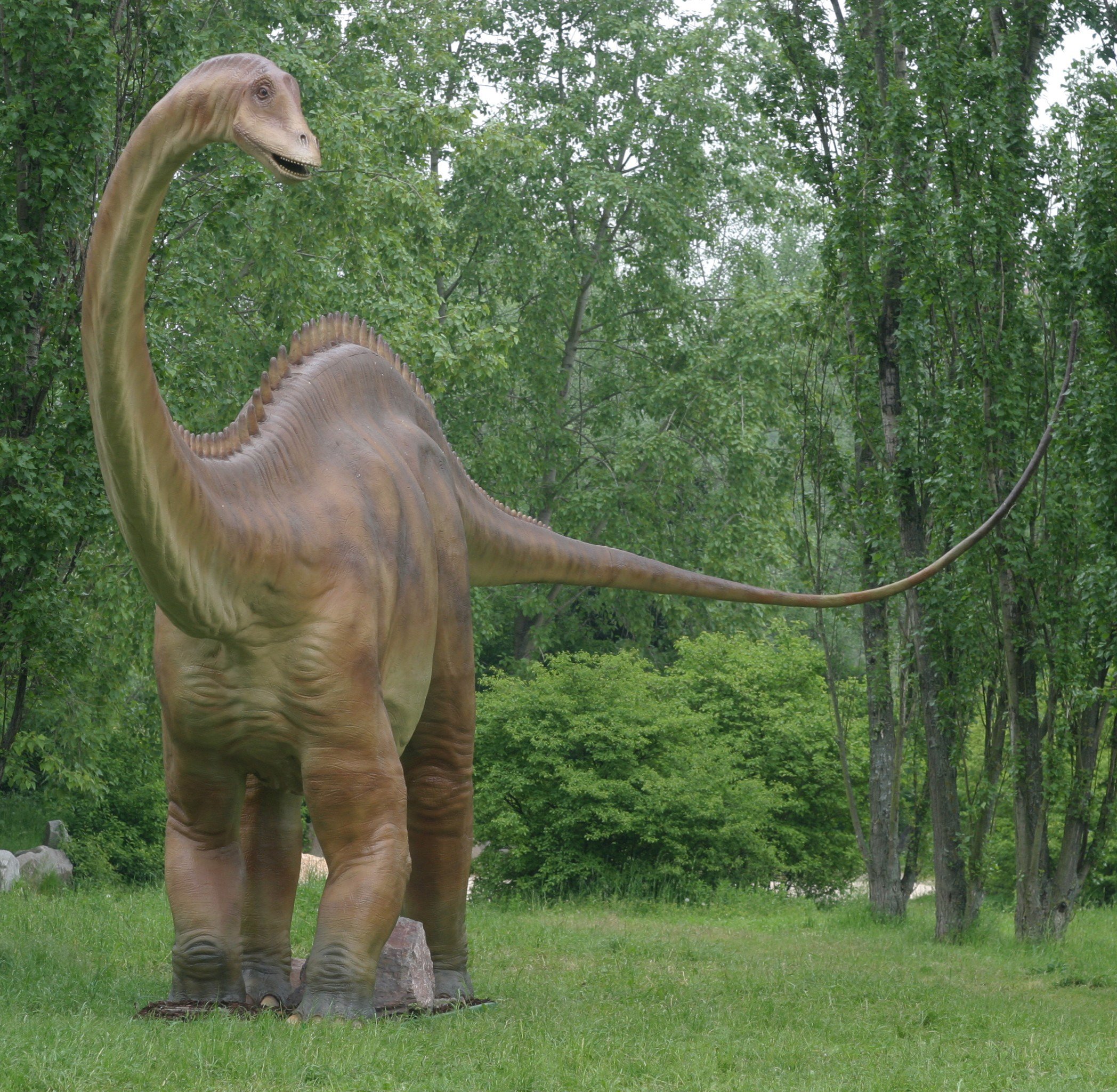 Diplodocus why evolution is true - Dessin diplodocus ...