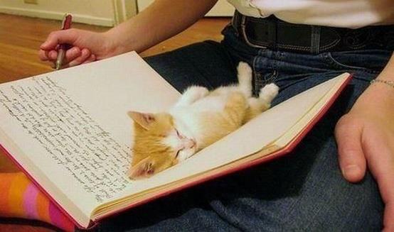 Kitten in book