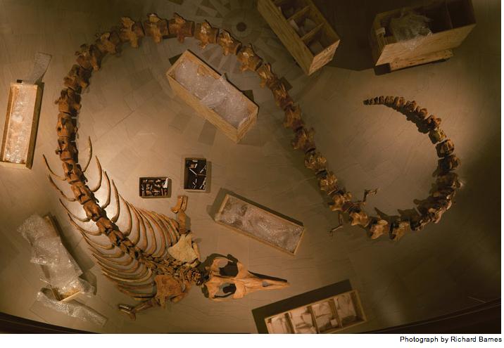 basilosaurus-entire