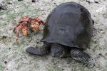crab & tortoise