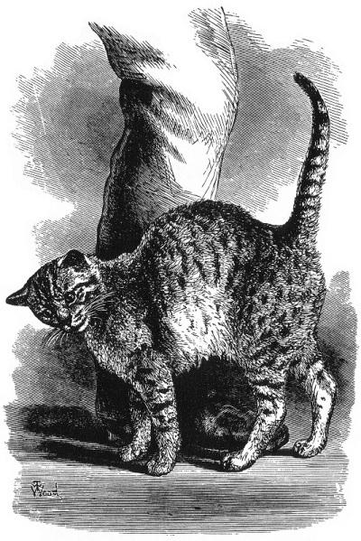 Darwin Kitty