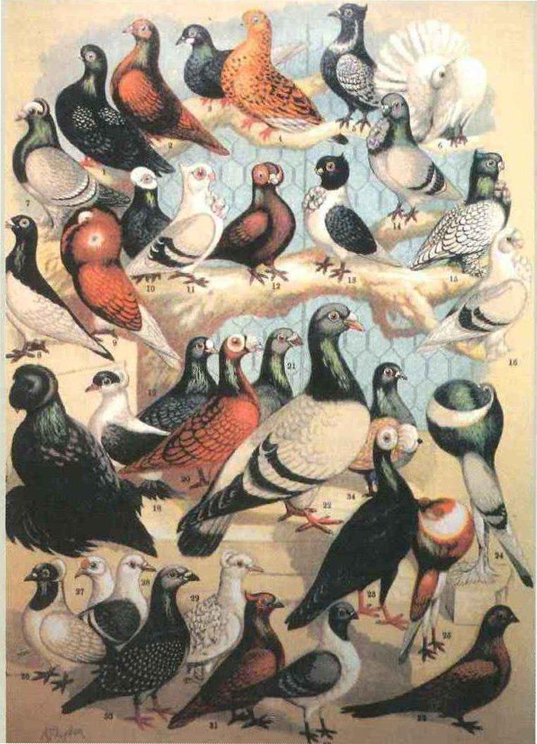 Darwins Finches Natural Selection