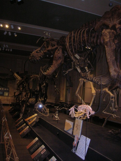 The main hall of the Dinosaur Discovery Museum.