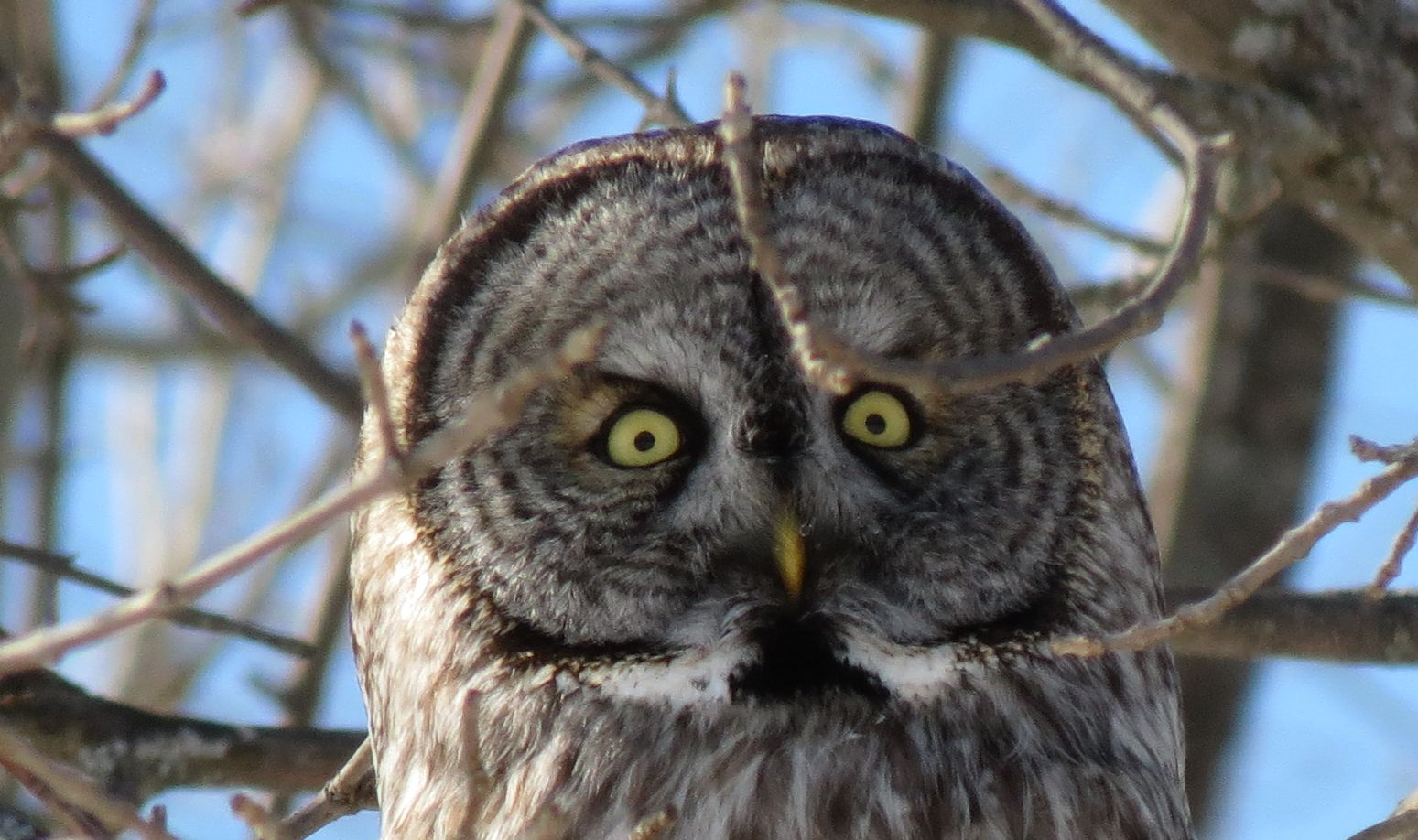Readers' wildlife: owls! (and a new piece on owl research ...