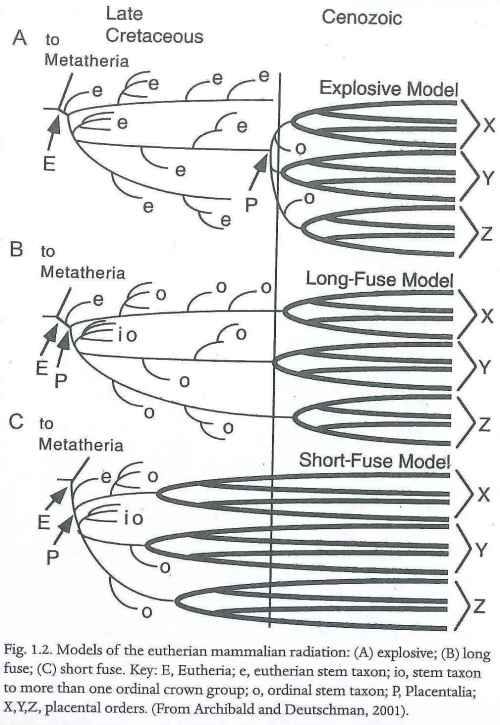 Models of placental mammal radiation (Rose, 2006).