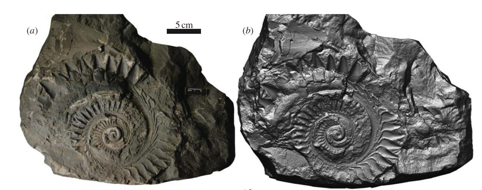 Buzzsaw!: An ancient spiral-toothed shark « Why Evolution ...