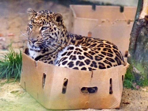 cat-in-box.jpeg