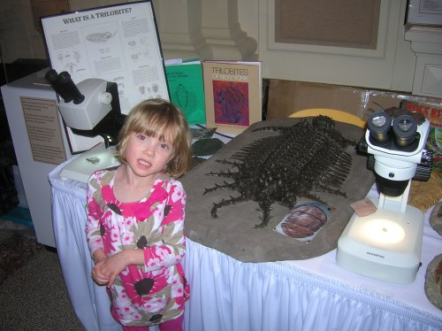 A young visitor momentarily glances up from the giant ornamented trilobite she had been examining.
