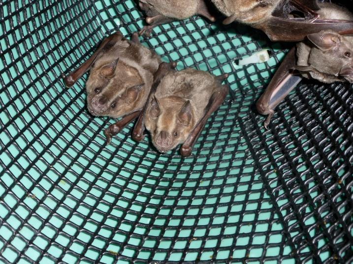 Bats in a tube