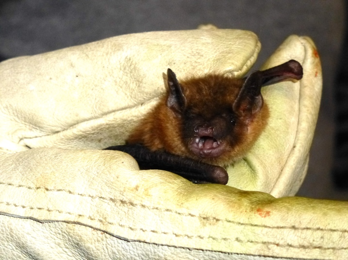 reciprocal altruism in vampire bats essay What we can learn from vampire bats  reciprocal altruism isn't restricted to vampire bats it is found in a number of long-lived species where individuals can recognise one another as.