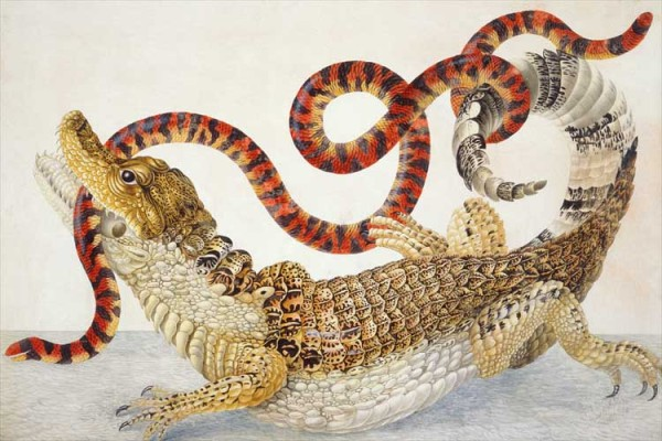 Illustration of a Spectacled Caiman (Caiman crocodilus) and a False Coral Snake (Anilius scytale)