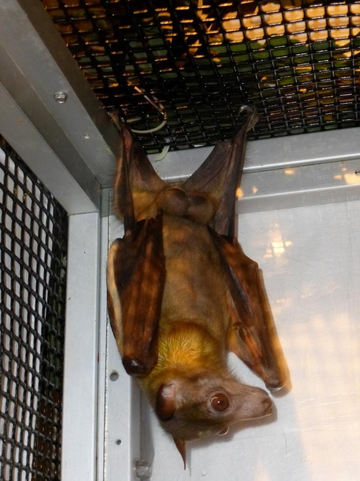 Well hung bat