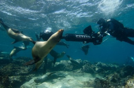 1 SVII with Sealions1© Catlin Seaview Survey-thumb-570x377-122282