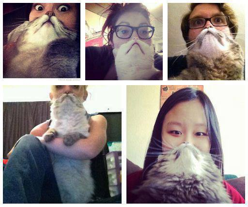 cat beards and a contest why evolution is true