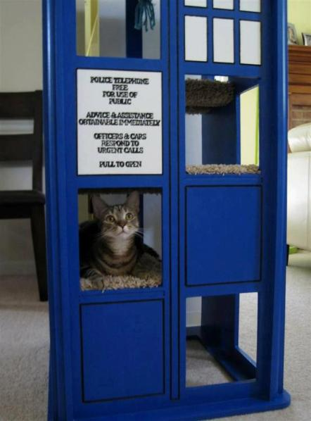 Doctor Who Kitty