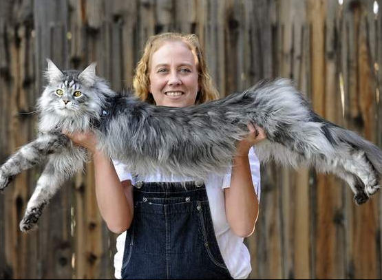 largest living cat guinness world records