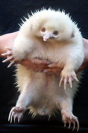 787370 Albino Animals 171 Why Evolution Is True