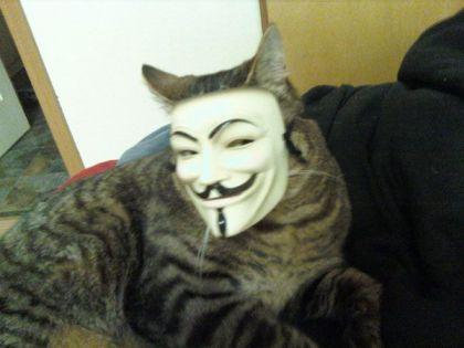 anonymous-cat