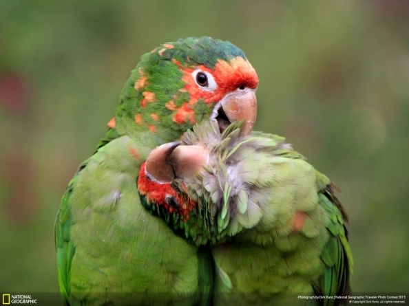 loving parrots