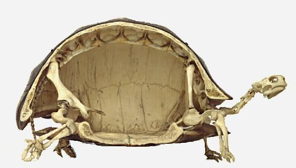 Inside a turtle.