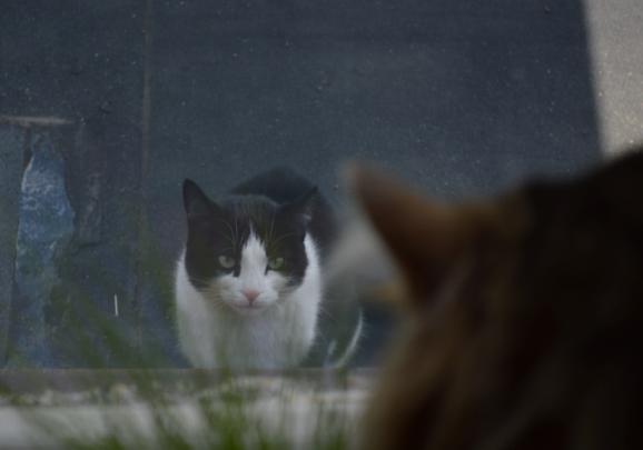window-cat-attack-2
