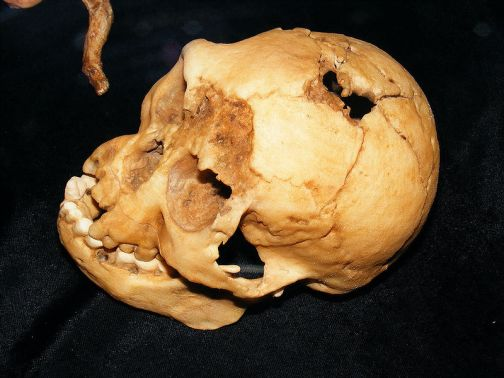 800px-LB1_skull
