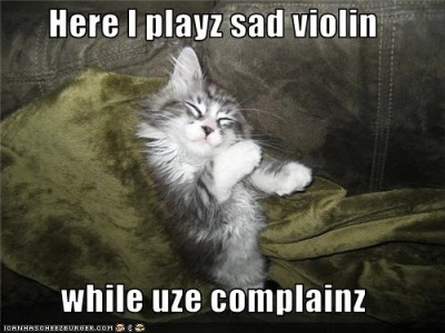 Violin complaining cat copy