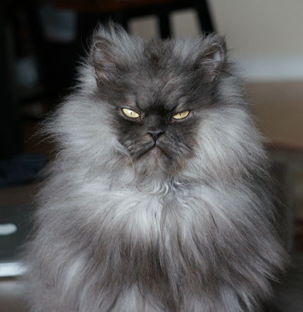 la-colonel-meow-world-record-holder-for-longes-001