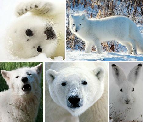 arctic-animals-main