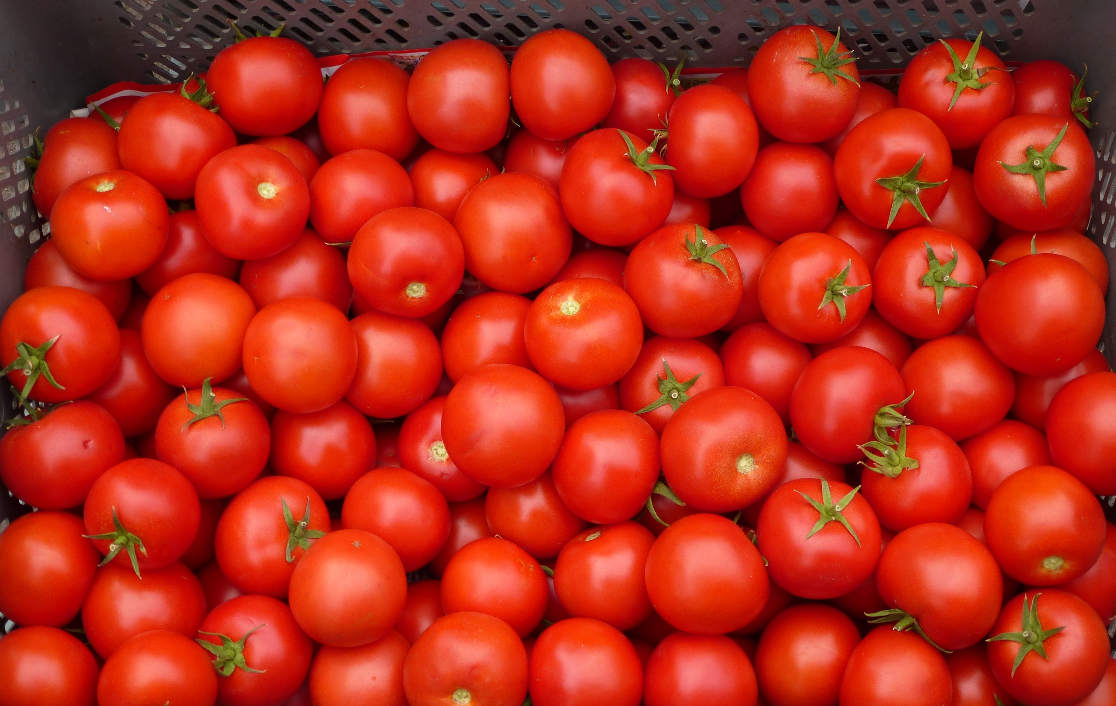 Tomatoes 171 Why Evolution Is True