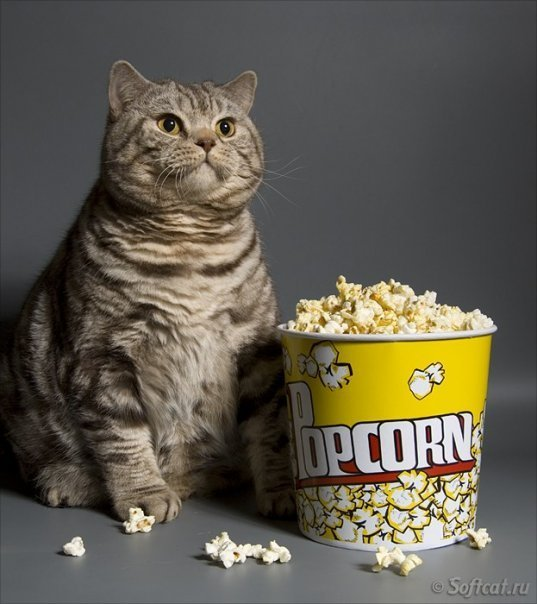 Fat Cat With Popcorn 171 Why Evolution Is True